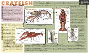 Placemat Dissection Guides