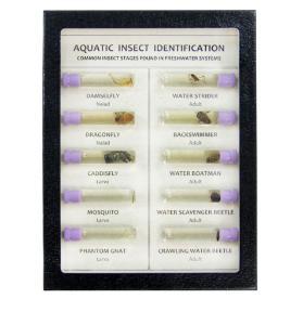 Aquatic insects riker mount, R288