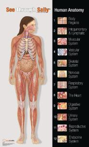 See-Through Sally™ Anatomy Chart Set