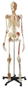 Rudiger® Best Of Rudiger Skeleton