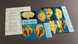 Biocam Concise Photographic Dissection Guides
