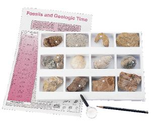 Premium Fossil Collection