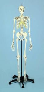 Rudiger Advanced Academic Skeleton