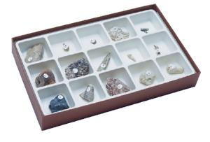 Types of Fossilization Collection