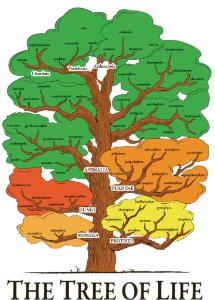 Ward's® Tree Of Life Chart