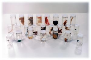 Specimen Survey Set