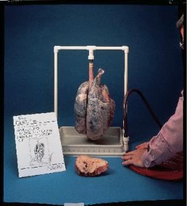 Inflatable Lungs Kit