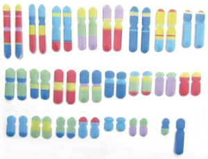 Model kit chromosomes