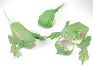 Model kit frog life cycle