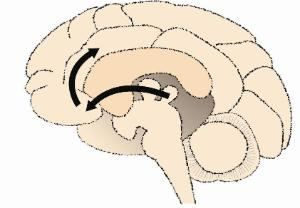 Science Take-Out® Brain Reward Pathway And Addiction