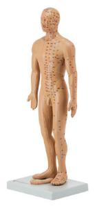 Altay® Acupuncture Model