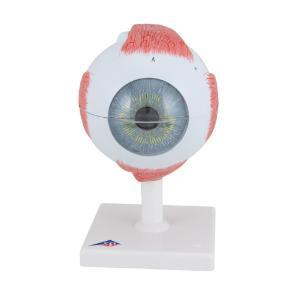 Model Giant Eye 5× Life