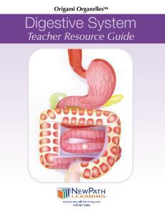 Model kit digestive system
