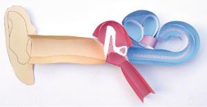 Model kit human ear