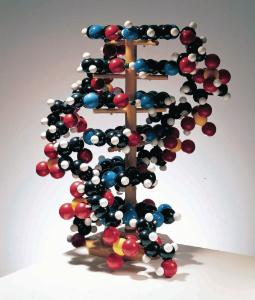 Denoyer-Geppert® Giant DNA Molecule Model
