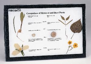Monocot-Dicot Comparison Riker Mount