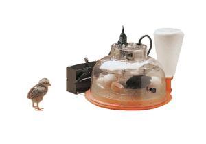 Automatic Incubator