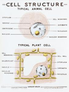Cell Structure Chart