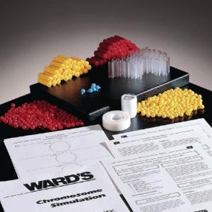 Ward's® Chromosome Simulation Lab Activity