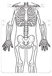 Roylco Skeleton Aprons