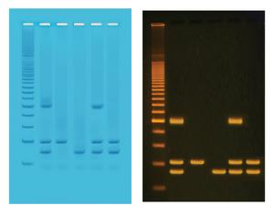 PCR Based Identification of Foodstuffs for Genetically Modified Organisms