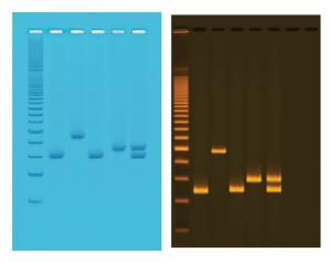 Water Quality Testing III Kit: Multiplexed PCR for Testing Water Bacteria