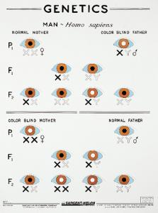 Color Blindness Chart