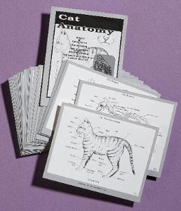 Cat Anatomy Cards