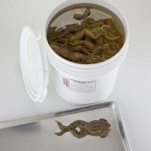 Formaldehyde-Free Grass Frogs