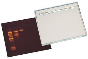 DNA GelSizer™