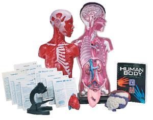 Exploring the Human Body Kit