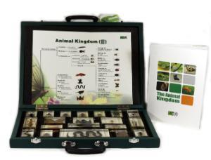 Realbug Animal Kingdom 2
