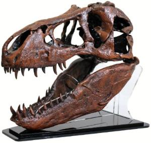 T-REX skull quarter scale replica