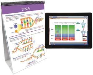 Flipchart with Multimedia Lesson:Chromosomes