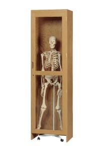 Wood Skeleton Display Cabinet
