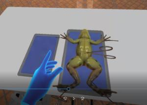 VR frog dissection