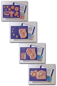 Human Reproduction Activities