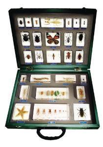 27-Piece Invertebrate Embedment Set