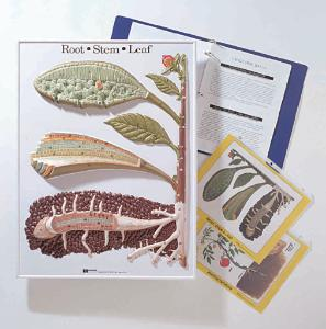 Botanical Activity Models