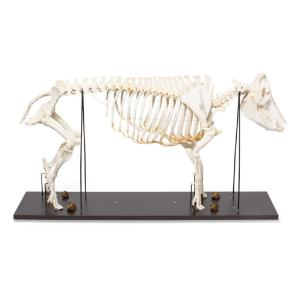 Pig Skeleton F Articulated