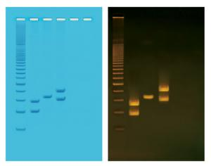 Human PCR Tool Box Lab Activity
