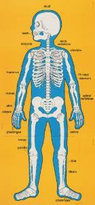 Child-Size Human Body Poster Set