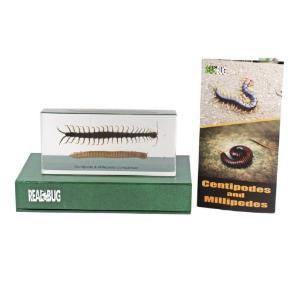Centipede And Millipede