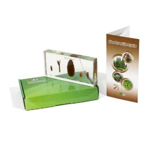 Invertebrates 27 Piece Set