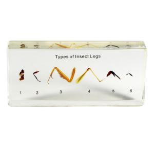 Types Of Insect Legs