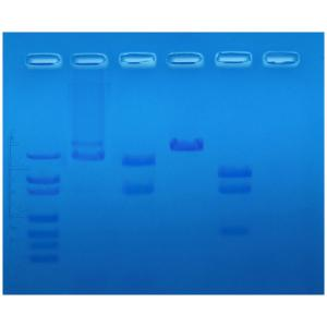 Restriction enzyme mapping