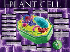 Cells: Structure, Function and Processes Posters