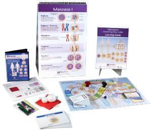 Meiosis Curriculum Learning Module