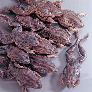 Preserved Grassfrogs, Double Injected