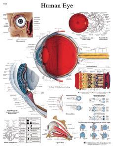 3B Scientific® Eye Chart